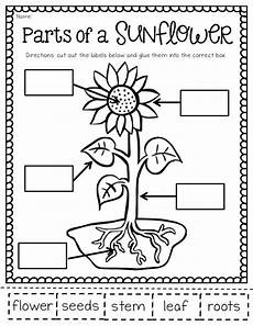 kinds of plants worksheets for kindergarten 13653 the may packet and freebies grade science second grade science plant lessons