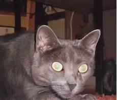 meine katze hat gestern erbrochen und frisst jetzt nicht