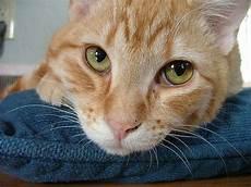 Rumah Kucing Pengetahuan Penting Sebelum Mengawinkan