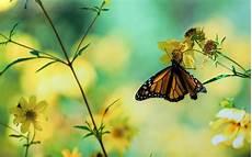 Butterfly Home Screen Nature Wallpaper