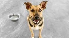 Welches Hundefutter Ist Das Beste - trockenfutter oder nassfutter welches futter ist besser