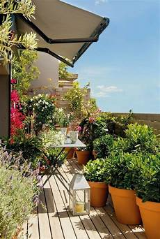 pflanze mit i balkongestaltung mit pflanzen hilfreiche tipps und beispiele