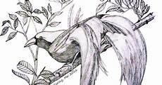 11 Sketsa Burung Yang Mudah Di Gambar