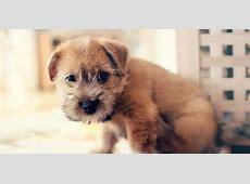 24 Honden die niet (of nauwelijks) verharen   De Honden Wereld