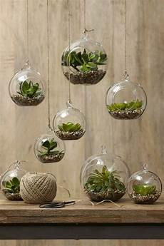 glas deko sukkulenten im glas im blickfang kreative deko ideen mit