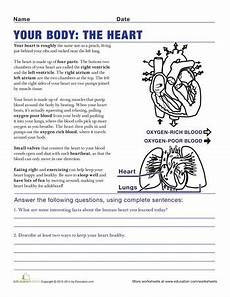 science worksheets for grade 7 igcse 12201 understanding the human 5th grade worksheets education anatomy anatomy