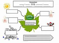 plants and photosynthesis worksheets 13616 17 best images about photosynthesis cell respiration on the equation and lungs