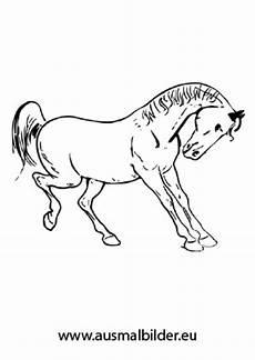 Ausmalbilder Springende Pferde Ausmalbilder T 228 Nzelndes Pferd Pferde Malvorlagen