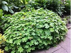 pflanzen für trockene schattige standorte july 2017 pflanzen f 252 r nassen boden