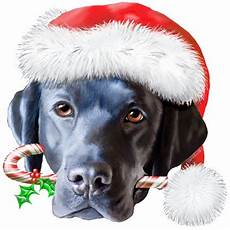 merry christmas to one and all the labrador
