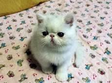 gattina persiana persiana a lamella orientabile colore effetto posot class