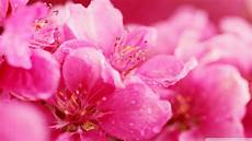 pink wallpaper 35 high definition pink wallpapers backgrounds for free