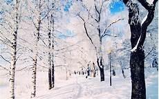 Winter Woods Wallpaper
