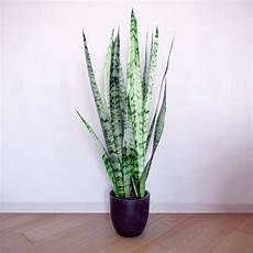pflanze für dunkle räume indoor plants suitable for rooms interior design