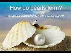 how do pearls form youtube