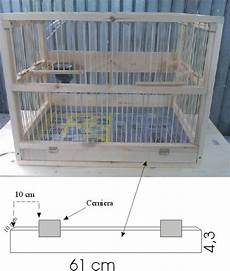 costruire gabbia per uccelli costruire gabbia per uccelli tutta in legno curiosit 224 web
