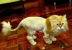 16 cats who seriously their stupid haircuts