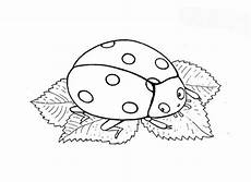 Insekten Malvorlagen Ninjago 8 Beste Ausmalbilder Marienk 228 Fer Kleeblatt Tiere Gratis