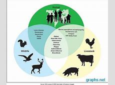 bat zoonotic diseases