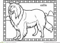 collie coloring page education