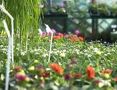 livraison fleurs tours fleuriste tours livraison de fleurs tours 37