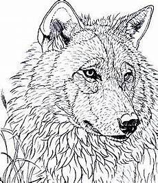 wood animals coloring pages 17194 coloring for adults kleuren voor volwassenen wood burning patterns stencil wood burning