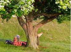 arbre a pousse rapide quel arbre fruitier pousse rapidement