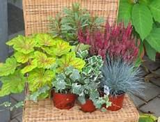 balkonpflanzen herbst winter balkonpflanzen herbst winter pflanzenversand