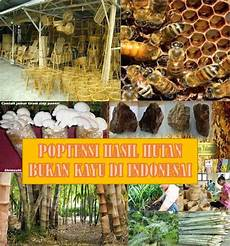 Potensi Hasil Hutan Bukan Kayu Indonesia Fathur Berbagi