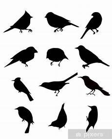 silhouetten vogel