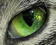 Ninjago Malvorlagen Augen Tier Tier Auge Jappy Gb Bilder Gb Pics G 228 Stebuchbilder
