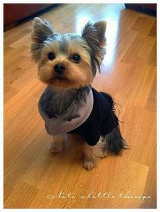 1307 best yorkie love images pinterest pets baby