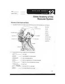 anatomy worksheets labs iv vi name lab time date review