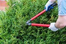 wann buchsbaum schneiden wann sollte b 228 ume schneiden 187 der beste zeitpunkt