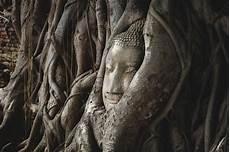 altes gesicht bewahren daemmung historischer stein buddha den kopf im baum ayutthaya wurzelt ist