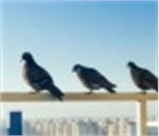 balkon katzensicher machen 187 diese m 246 glichkeiten gibt es
