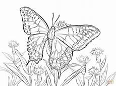 world swallowtail coloring page free printable
