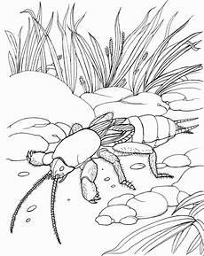 Insekten Malvorlagen Lyrics Insekt Dicke Beine Ausmalbild Malvorlage Tiere