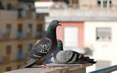 Tauben Vom Balkon Vertreiben 7 Tipps