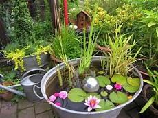 zinkwanne als miniteich mit zwergseerosen bepflanzung