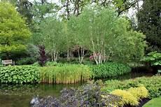 longstock park water garden hshire the frustrated gardener