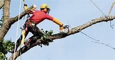 devis elagage arbre entreprise elagage arbre devis prix pour elaguer un arbre