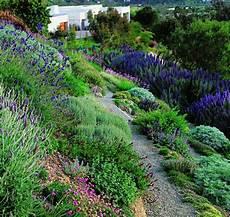 steilen hang bepflanzen 123 best images about hillside xeriscape on
