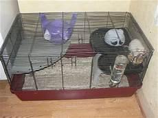 gabbia per scoiattoli fai da te ripiano per gabbia alaska mondo criceto
