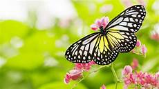 pictures of flowers and butterflies in hd for desktop