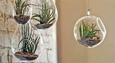 plante suspendue verre diy 5 id 233 es cr 233 atives pour un jardin d int 233 rieur bio 224