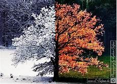 Ausmalbilder Herbst Und Winter Herbst Und Winter Bilder Einer Eiche W 228 Hrend Der