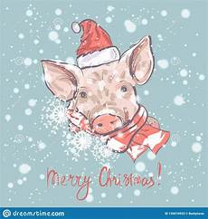 merry christmas pig pictures pig merry christmas funny card design with cartoon pig in santa s hat and scarf stock vector