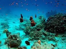 10 Taman Bawah Laut Terindah Di Indonesia Alidesta Adventure