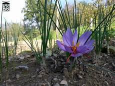 il fienile di scarperia b b il fienile di scarperia piante fiori e frutti